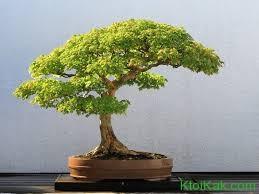 Интересные факты о деревьях для детей
