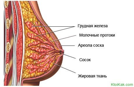Мастопатия описание болезни