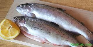 Организация хранения соленных рыбных товаров
